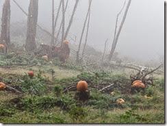 pumpkin shoot 19