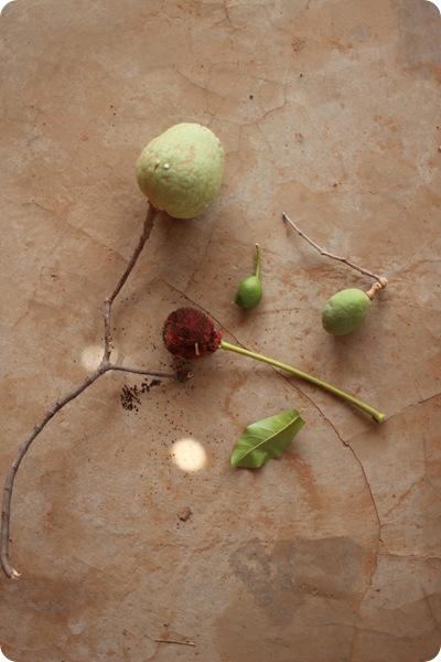 fruit01