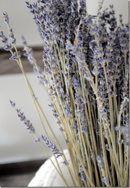 lavender and ladder