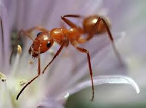 Amazing Pictures of Animals, Photo, Nature, Incredibel, Funny, Zoo, Ecitoninae, New World Army Ants, Alex (8)