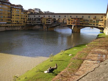 Imagini Italia: Ponte Vecchio Florenta