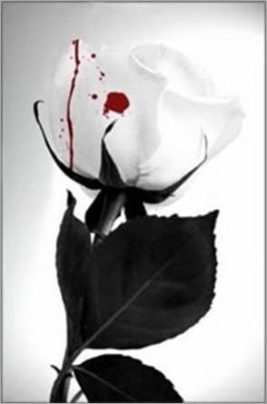 rosa_y_sangre[1]