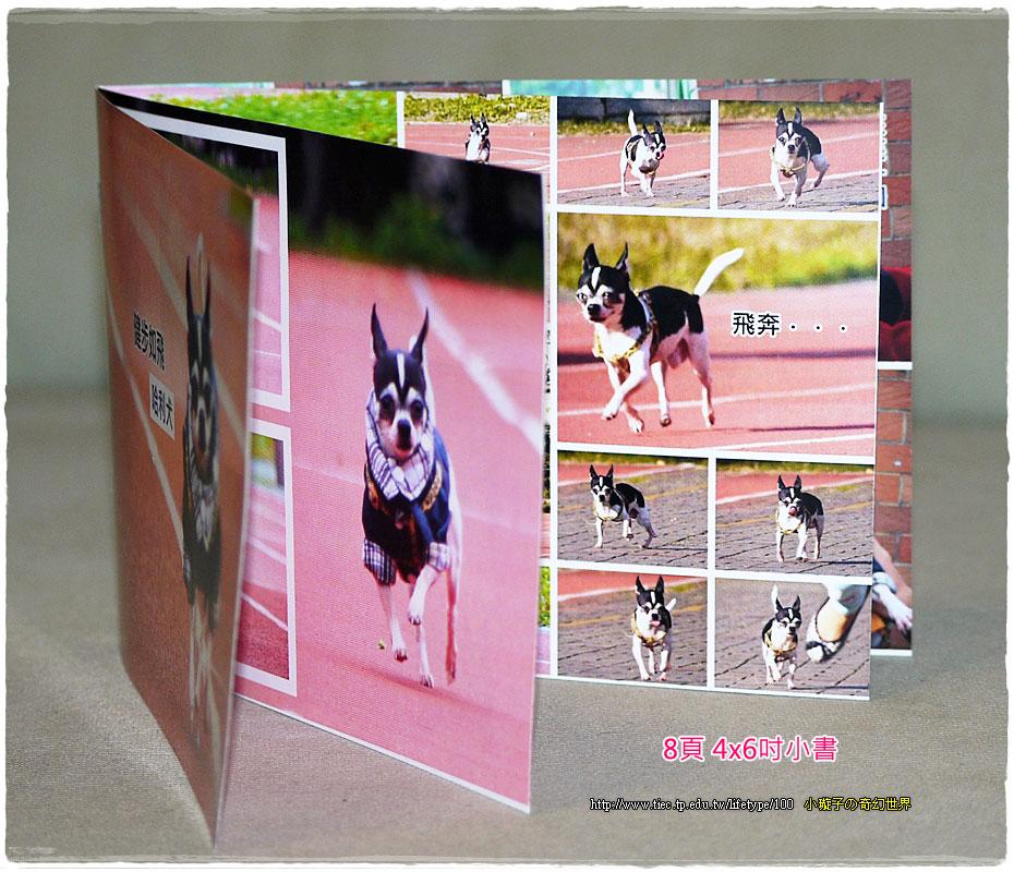 dog-fly09.jpg
