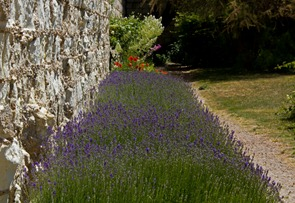loches-lavender