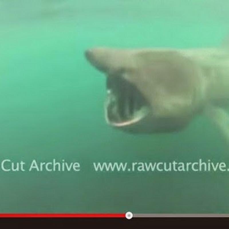 Σχεδόν τον κατάπιε ο καρχαρίας