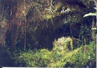 hutan-lumut