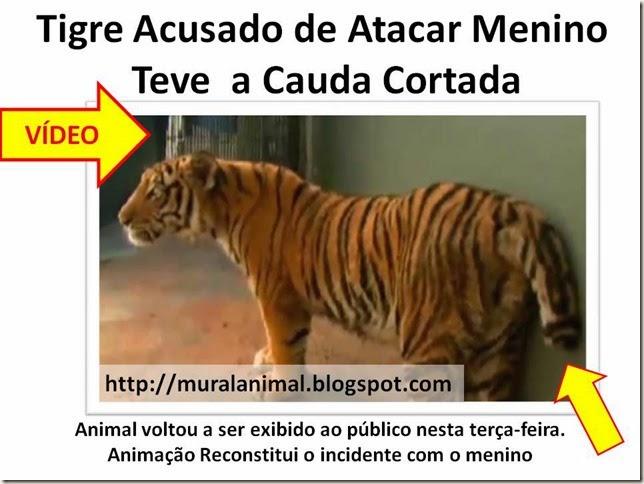 tigre cauda