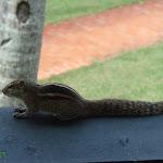 Shri-Lanka (30).jpg