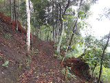 One of the many trails through coffee plantations on Gunung Seminung (Dan Quinn, October 2012)