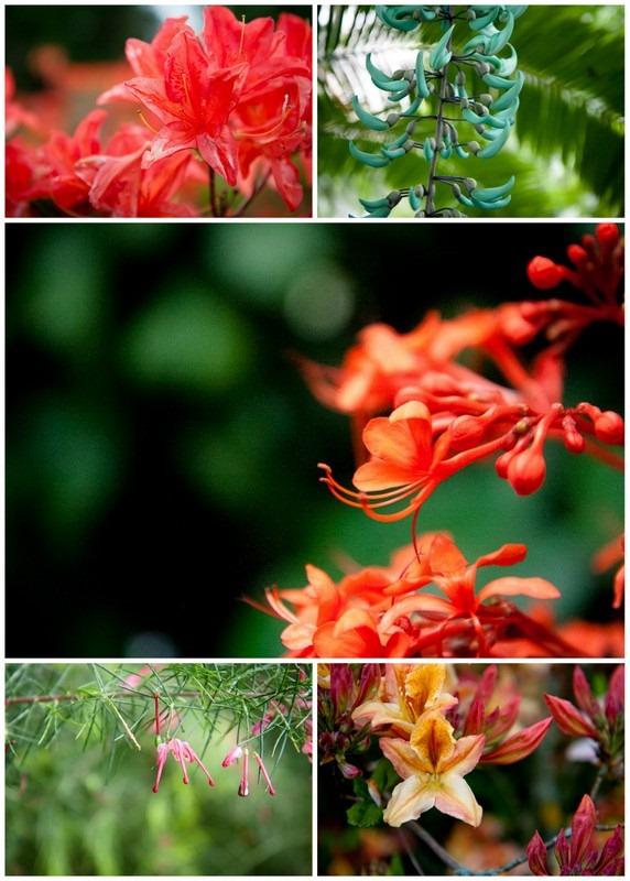 kew gardens2