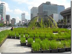 agricultura_urbana_en_seu__l_julio_2012-528x396