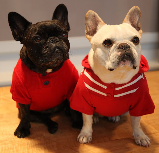 Red is also a good color for us, don't you think, Sharkey?  This fashionable henley is really comfy!  And your hoodie is the best!