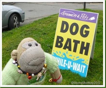 Dog Bath While You Wait