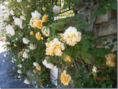 Giardino iris e rose 250