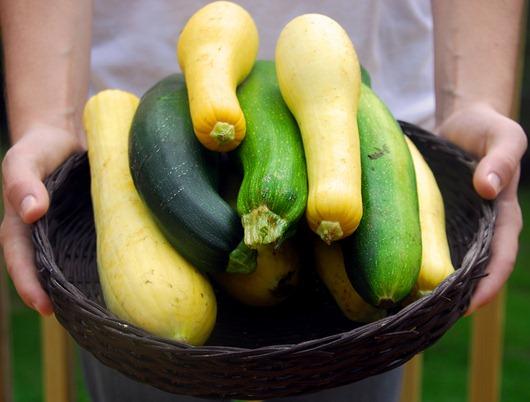 Squash-summer-harvest
