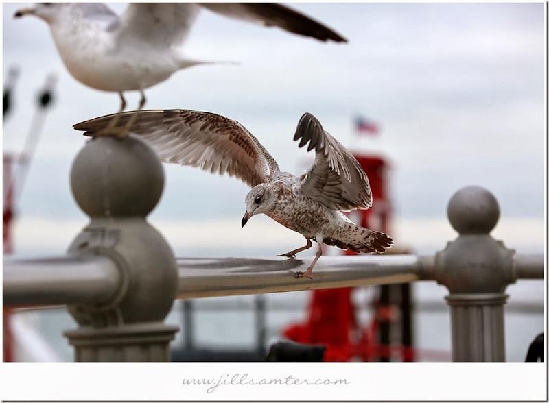 birdflight3
