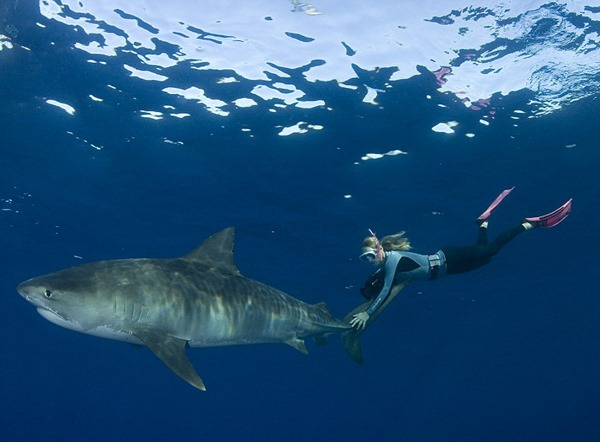 The shark lover wants to challenge the misconceptions people have about the oceanic predators