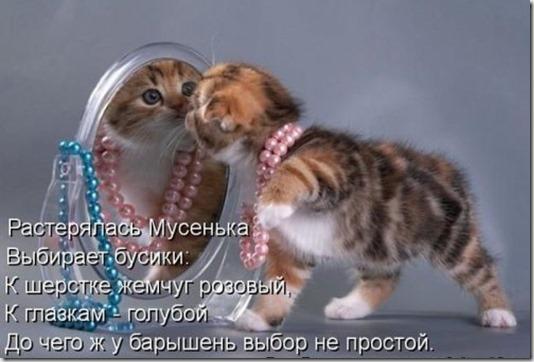 1353684257_shikarnye-kotomatricy-9