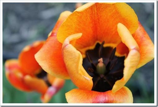 spring 2014 pics 001