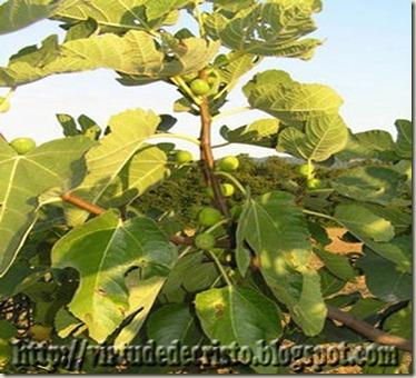 plantas da biblia