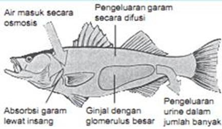 ikan air laut