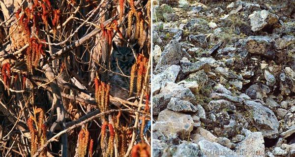 camuflagem-invisivel-animal-camouflage-photography-art-wolfe-desbaratinando (15)