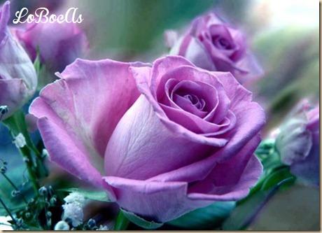 rosas-rosa-LoBocAs-1005