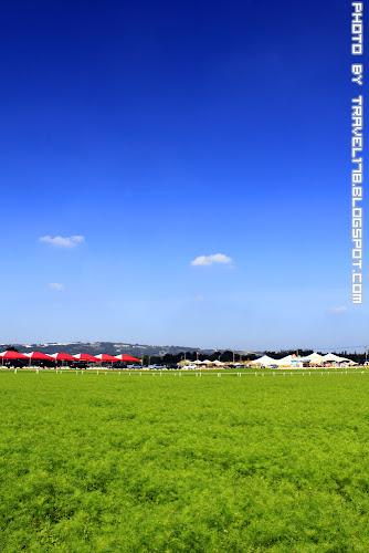 2012新社花海