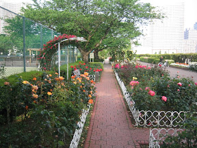 A rose garden in the park at the Shibuara Water Reclamation Center