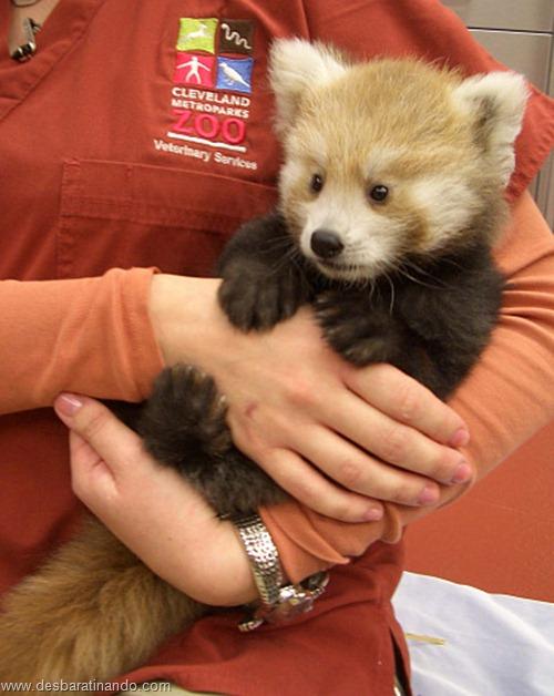 filhotes recem nascidos zoo zoologico desbaratinando animais lindos fofos  (17)