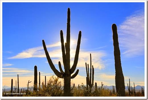 131202_SaguaroNPWest_017