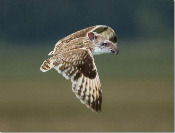 photoshop-animals-pixels-7