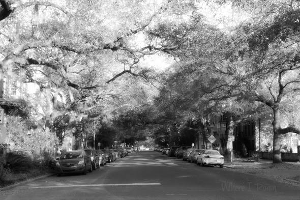 Savannah scenes 10