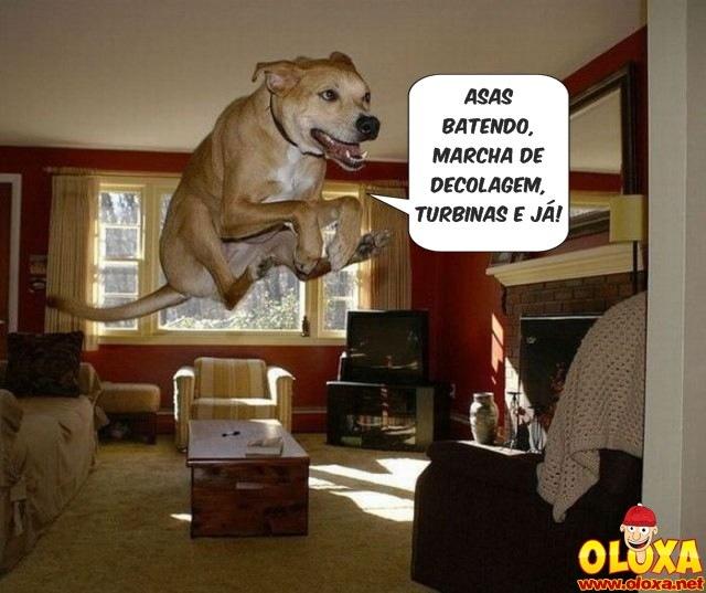 cão a jato