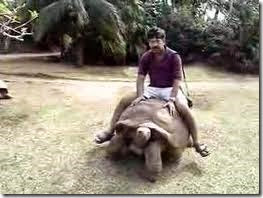 humor tortugas (45)