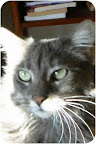 Millie.Tucson, AZ..I am an adult Russian Blue feline -- that's code for