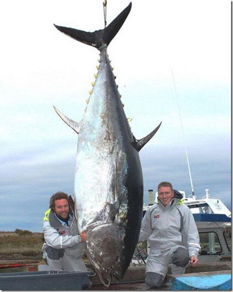 big-fish-fishing-9