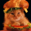 Cat Diet Calculator icon