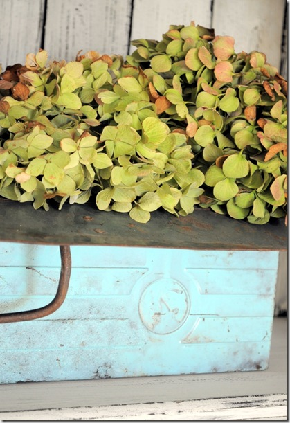 hydrangeas in toolbox