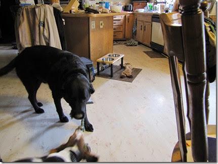 beagle10-01-14t