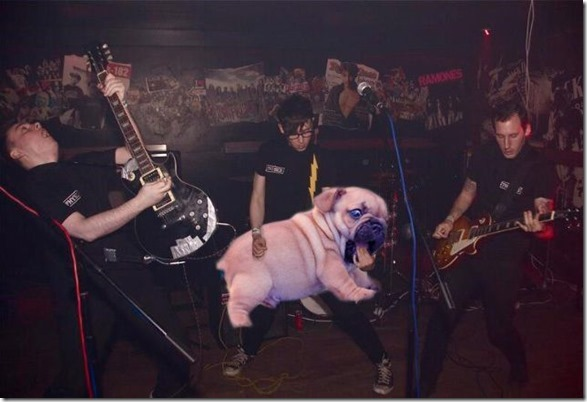 guitar-dogs-photoshop-4
