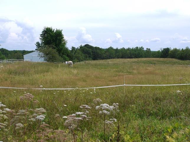 meadow_6