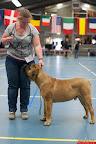 20130511-BMCN-Bullmastiff-Championship-Clubmatch-1597.jpg