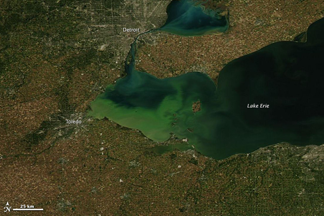 The waters of Lake Erie seem to glow green in this image taken by the Moderate Resolution Imaging Spectroradiometer (MODIS) on NASA's Aqua satellite on 26 September 2013. The color comes from a toxic algae bloom, which has been growing in the lake since mid July. Photo: LANCE/EOSDIS MODIS Rapid Response Team at NASA GSFC