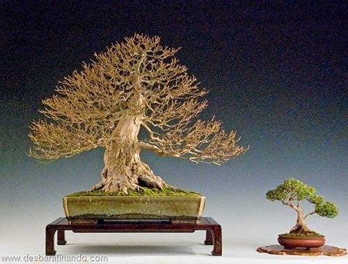 bonsais arvores em miniatura desbaratinando (62)