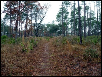 03e2 - Yearling Trail - Pine Trees