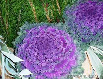 Cabbage flower - purple