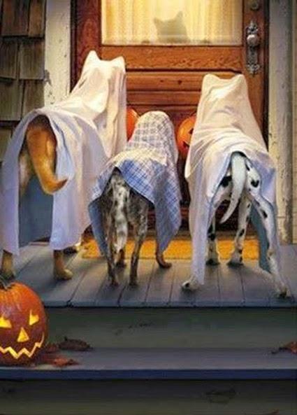 Halloween Fun  001