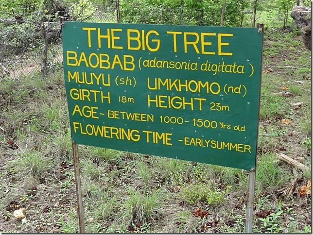 Big_Tree_Victoria_Falls_1