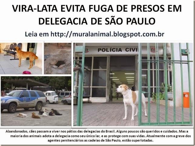 VIRA-LATA EVITA FUGA DE PRESOS EM DELEGACIA DE